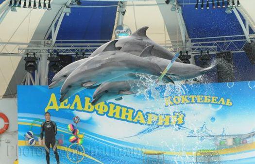 В летнее время дельфинарий даёт по 3 представления в день