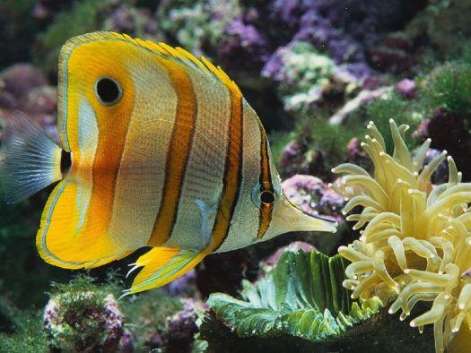 В аквариуме Коктебеля представлены практически все виды черноморских рыб