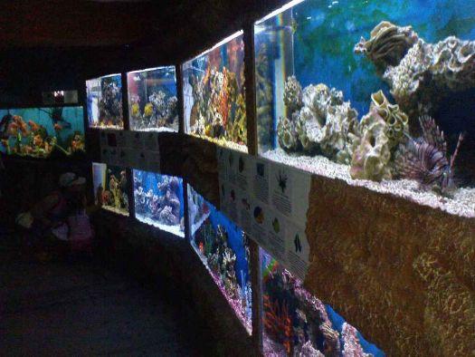 Посещение аквариума - очень интересное занятие