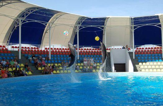 Не поленитесь потратить время на поездку в партенитский дельфинарий