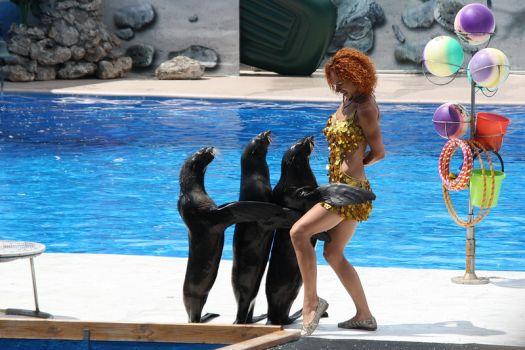 Обязательно посетите Севастопольский дельфинарий - без него представление о городе будет не полным