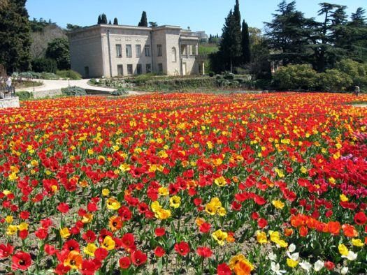 Никитский ботанически сад наряден всегда