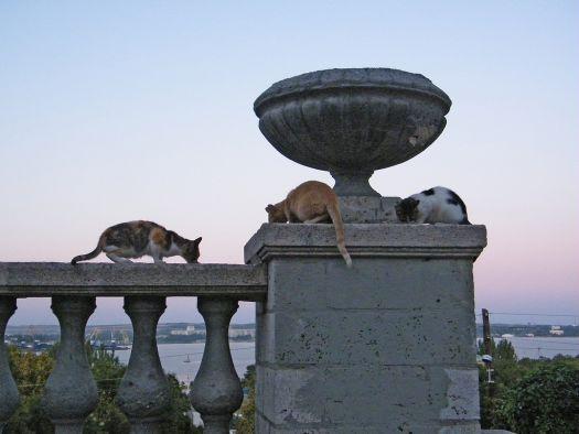 Говорят, что кошки в Керчи - тоже часть достопримечательностей, так уж их много здесь..