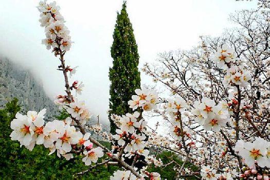 В феврале в центральной России еще безраздельно властвует зима, а в Крыму уже идет весна!