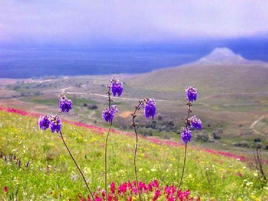 Май, безусловно, один из самых красивых месяцев в Крыму!